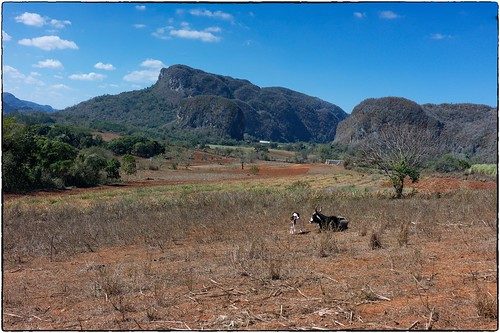 Mountains And Cows, Rural Cuba, February 14, 2017 | by Maggie Osterberg