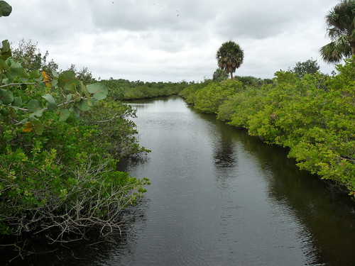 Channel in Mangrove | by Peter Long