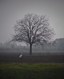 the white bird and the tree | by matteobalboni