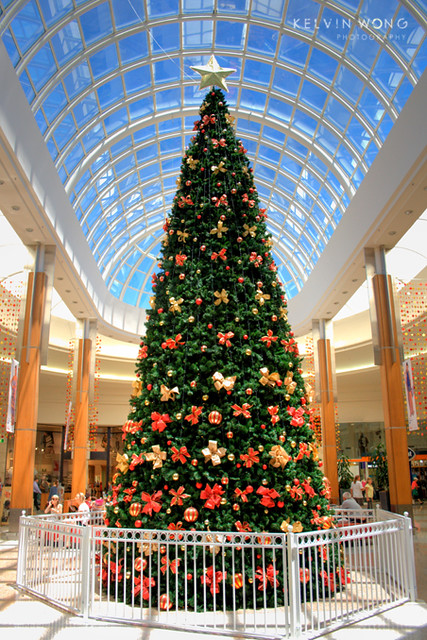 Giant christmas tree recently busy tidy up and cleaning