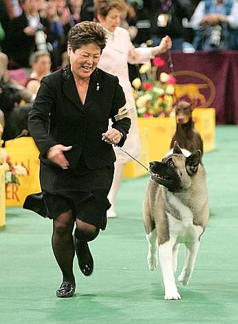 how to become a dog handler for dog shows