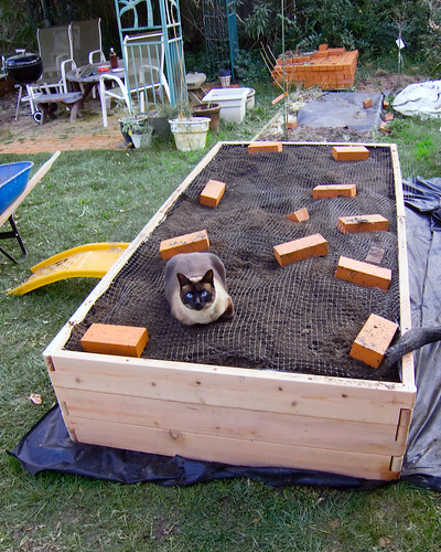 world's largest cat box - not | by Robert Couse-Baker