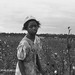 King Cotton | 1935