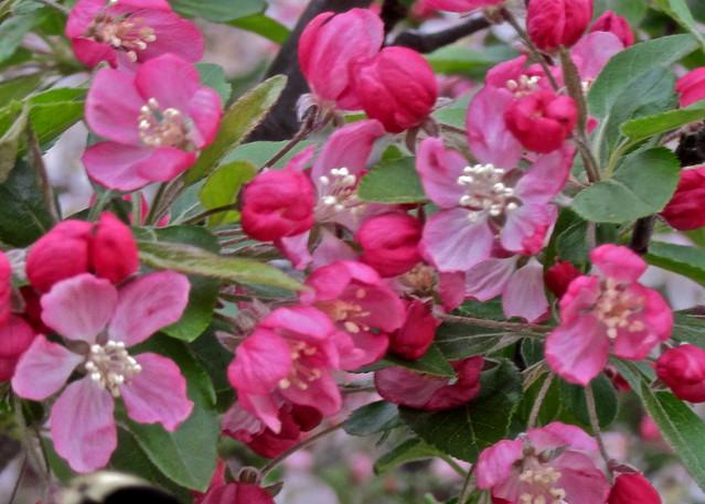 Apple Blossom Festival Food Fair