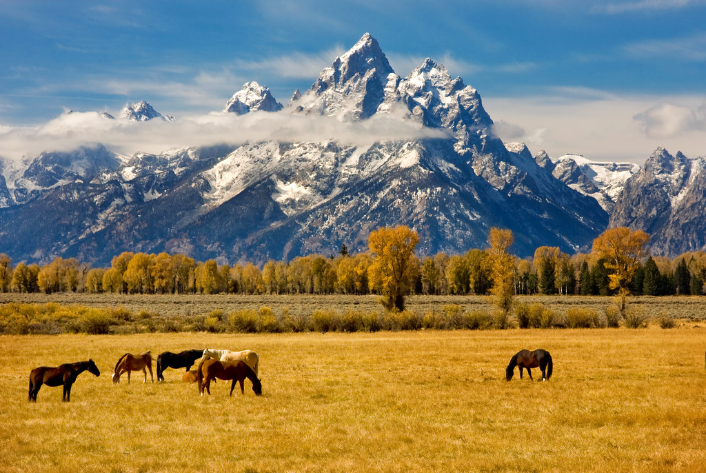 horses - Grand Tetons - 10-02-09 03 - Explore! | This is ...