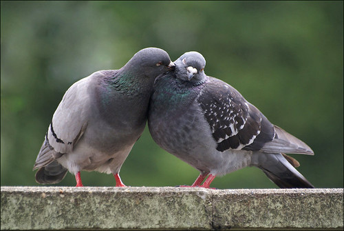 Love is in the air | by Foto Martien