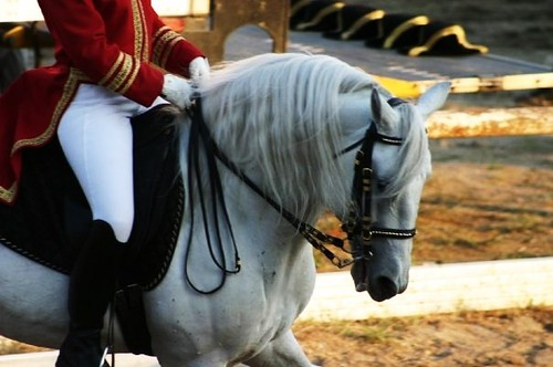 a overview of legendary lipizzaner stallions See traveler and expert reviews get the best prices and full itinerary for the legendary danube by avalon waterways from $3,058 compare to similar trips.