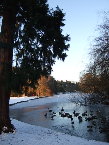 Ducks on the frozen River Blythe, Brueton Park, Solihull | by Solihull Heritage & Local Studies Service