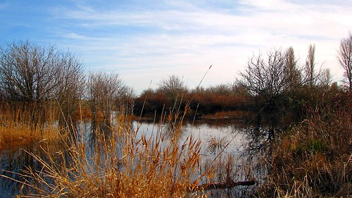 Winter Marsh | by Brenda Boisvert .