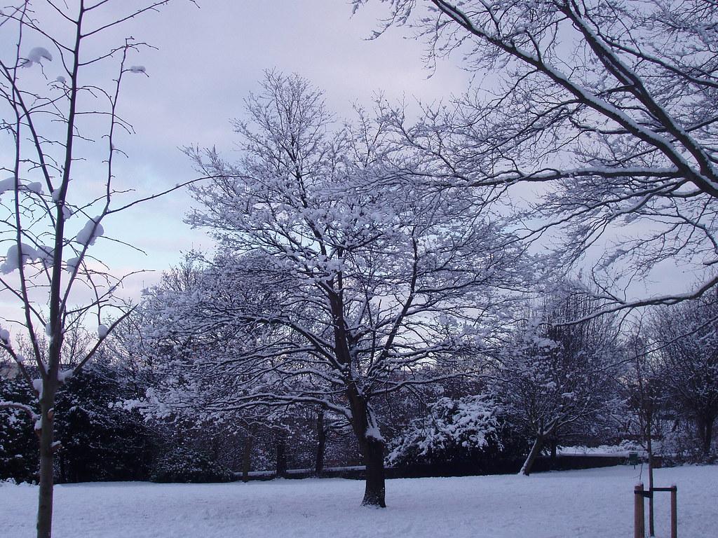 winter in Sheffield General Cemetery – open field (over mass grave)