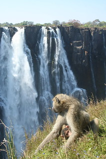 Victoria Falls, Zambia | by the_gobetween