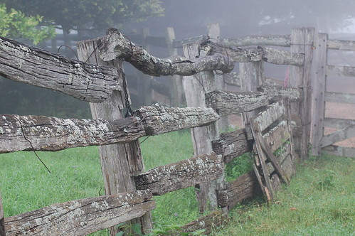 Old Fence | by Leigh Wright