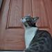 Forlorn kitty
