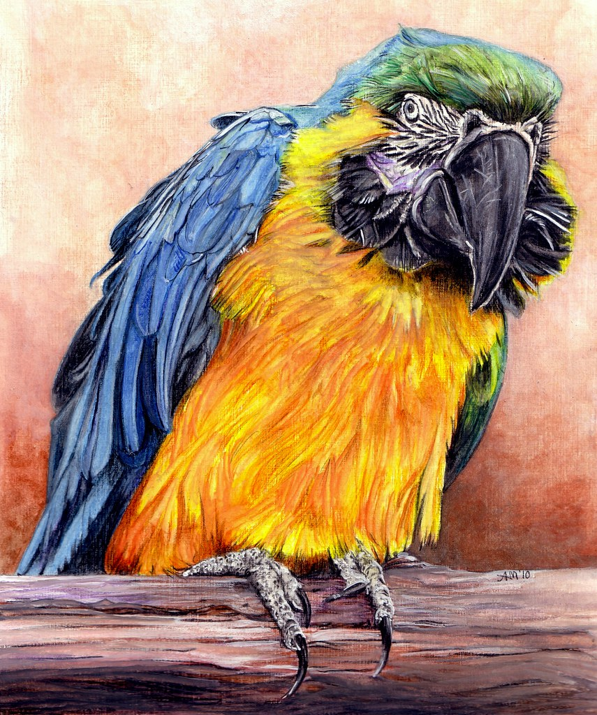 macaw parrot i think in water colour pencil mixture of u2026 flickr