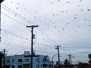 Crows commuting Home | by Alyx Dellamonica
