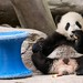 Yun Zi says :  Apples are good for you