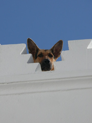 Dog on roof, Tangier, Morocco | by fam_nordstrom