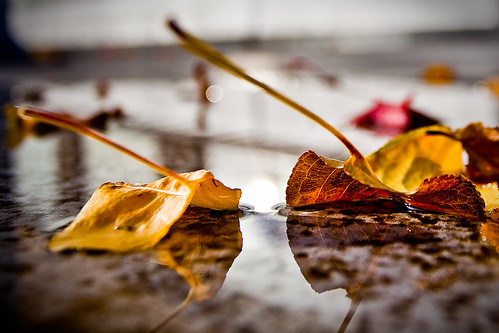 As an Ant Sees Leaves in a Puddle | by lyzadanger