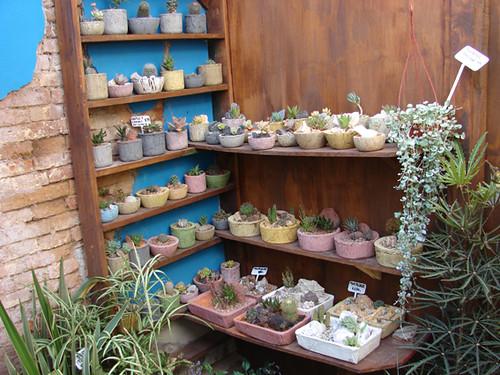 Cactus en macetas de cemento jardinesasi multi tienda for Macetas de cemento