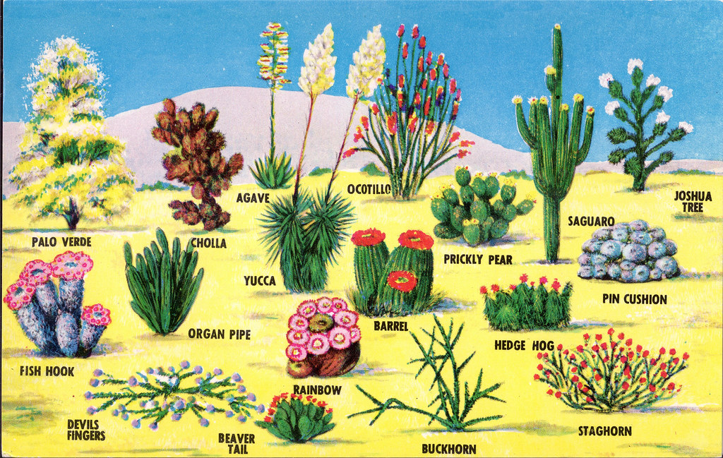 Desert plants postcard from the reverse for Landscaping plants pictures and names