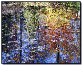 Autumn Reflected | by Lisa-S