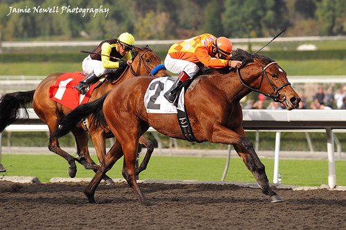 Evening Jewel wins the California Breeders Stakes | by creepy_coyote