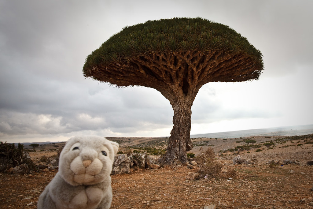 Socotra Island Travel Blog
