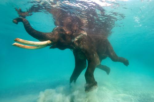 Andaman Ocean Tours