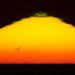Sunset with small green flash and a gull bird flying forming a silhouette in front of the blazing setting sun with 1200mm (600mm + 2X Tele-extender) off the coast of Morro Bay, CA 30 Oct. 2009