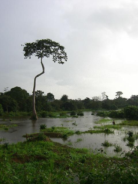 paysage ivoirien 5 c te d 39 ivoire 2006 guillaume ferreux flickr. Black Bedroom Furniture Sets. Home Design Ideas