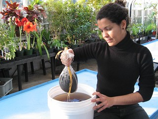 Karla with compost tea | by Brooklyn Botanic Garden