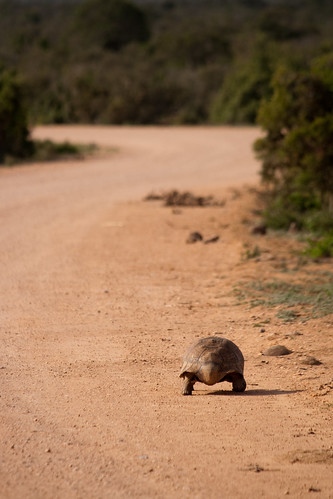 Turtle - Creative Commons 2009 high resolution | by zoutedrop