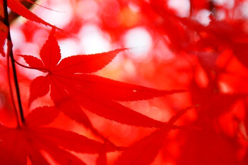 Red in light | by coco_tsukihime
