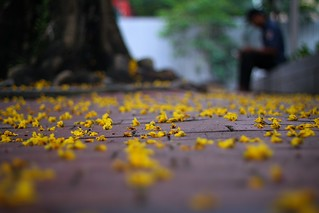 167 - Almost Dusk: Sea Of Little Yellow Flowers... | by @ris_@bdullah 