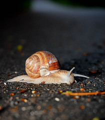 Snail on the road :-) | by Arkadiusz Benedykt