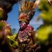 Mount Hagen - Papua New guinea