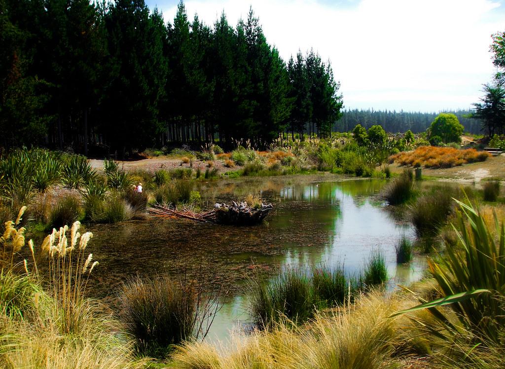 Bottle Lake Forest Dog Park