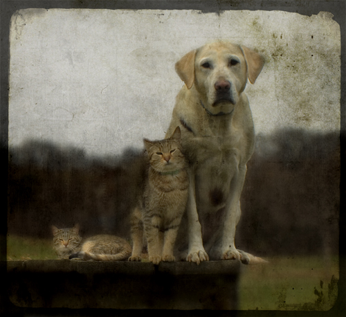 a dog named janet | by jamie heiden