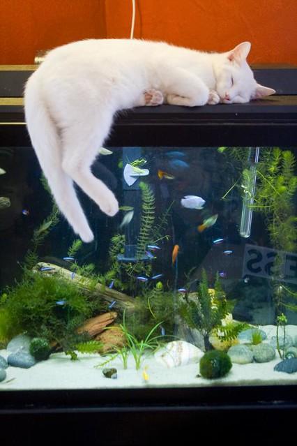 Cat Jumps Over Pet Gate