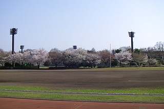 Race track sakura | by Blue Lotus