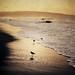 Dawn, Manhattan Beach