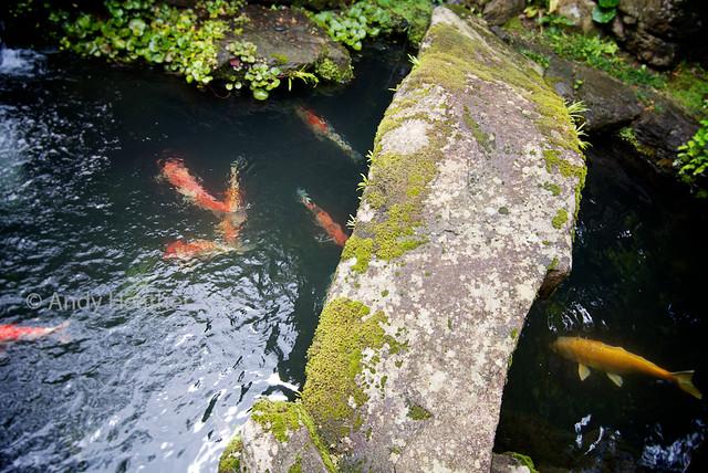 stone bridge in a japanese garden over a pond full of koi carp by oraz