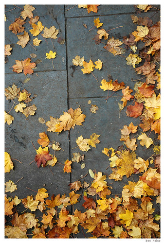Dead Leaves | by Ben Heine