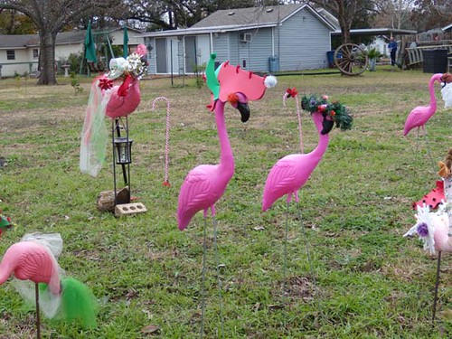 A flamingo Christmas in Austin | by PetsitUSA Pet Sitter Directory