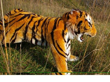 Realistic Tiger Costume - photo#3