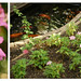 Pink Diptych
