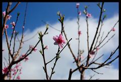primavera..