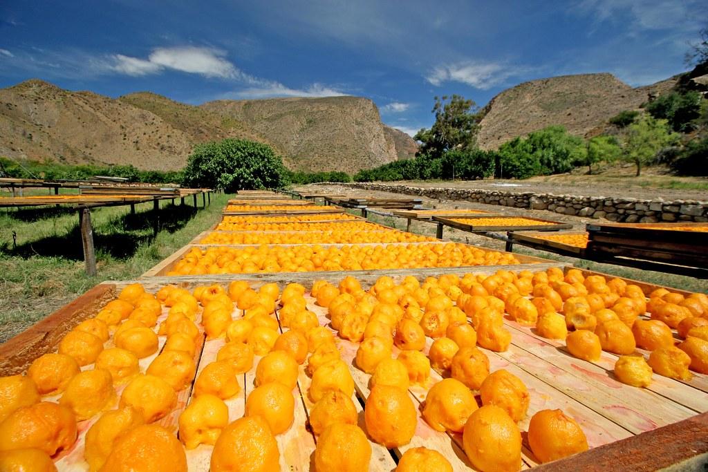 Weltevrede Farm Prince Albert South Africa Weltevrede