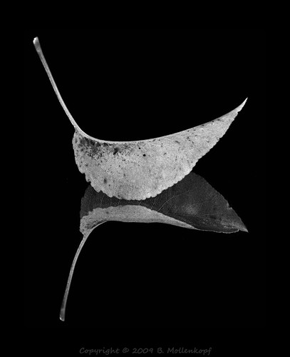 B&W Leaf Art 1 | by Brian Mollenkopf