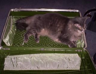 Suitcase Cat Bed Double Site Etsy Com